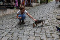 Tegan patting a puppy on a cobblestone road