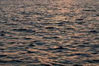 Water ripples and golden light reflecting off them
