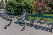 Man surrounded by pigeons on a park bench in the gardens