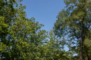 Green trees, clear blue skies