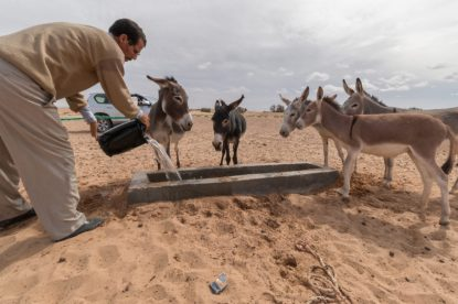 The nomads donkeys getting water from the well