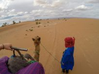 Camels eye view from the camel walk
