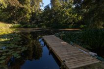 Jetty dan built into the pond, water lilies floating around, trees surrounding, reflecting in the water