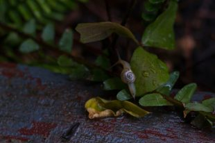 Snail on the leaf, water droplets around it