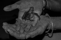 baby turtle in tegs hand