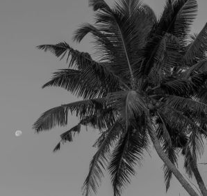 black and white photo of a palm tree and the moon behind it