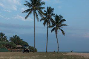 tuk tuk parked under 3 lone palm trees