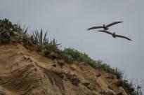 2 Huge birds going in to land