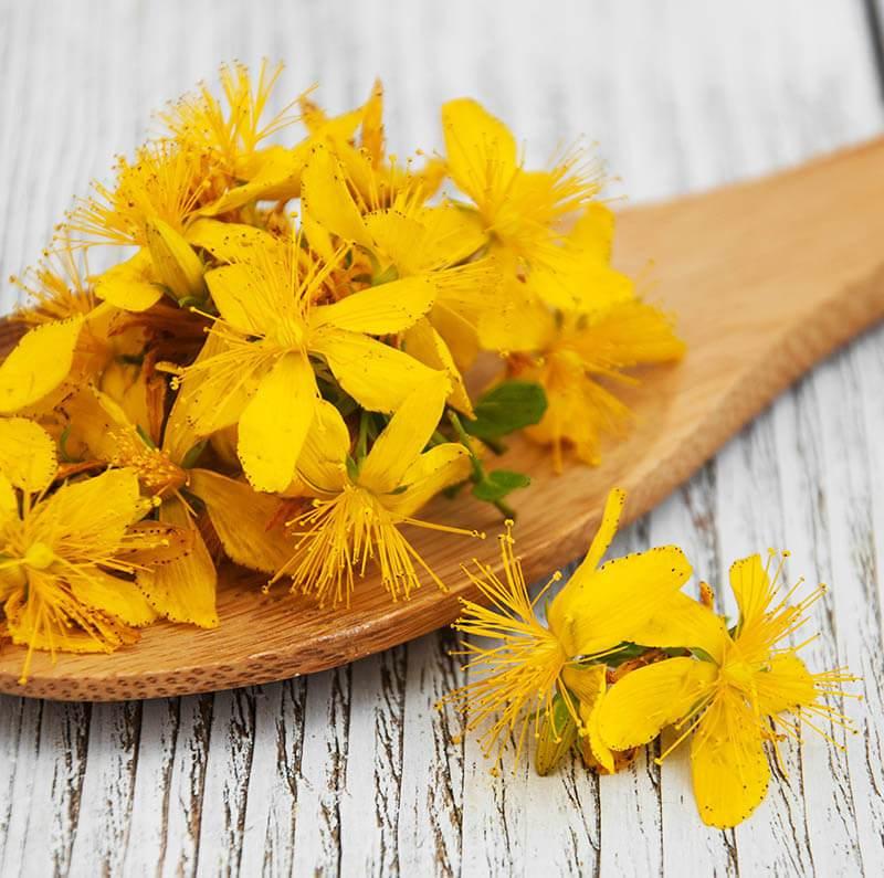 flori de sunatoare beneficii