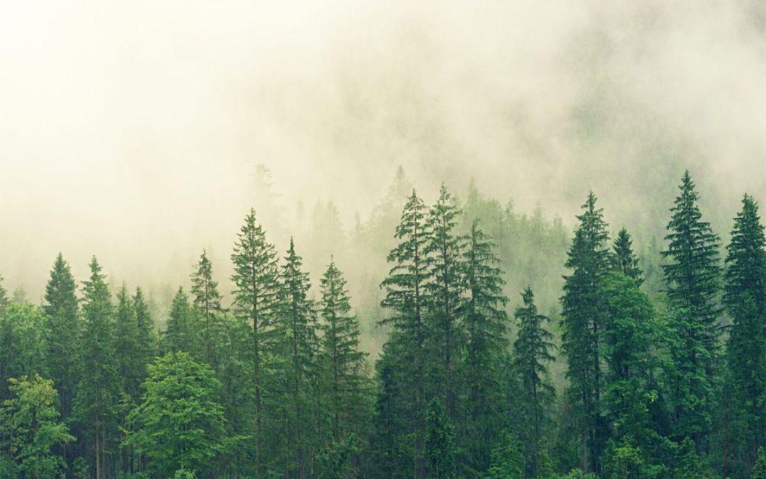 La reforestación, la construcción más sostenible del mundo