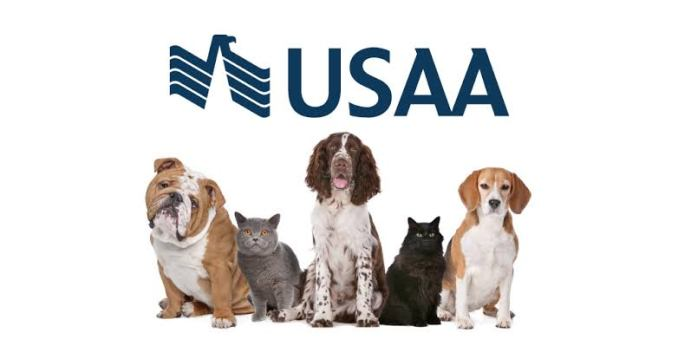 USAA Pet Insurance: Review and Questions Asked