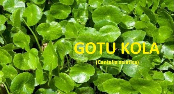 What is Gotu Kola: Used for Skin Tightening and Its Side Effect
