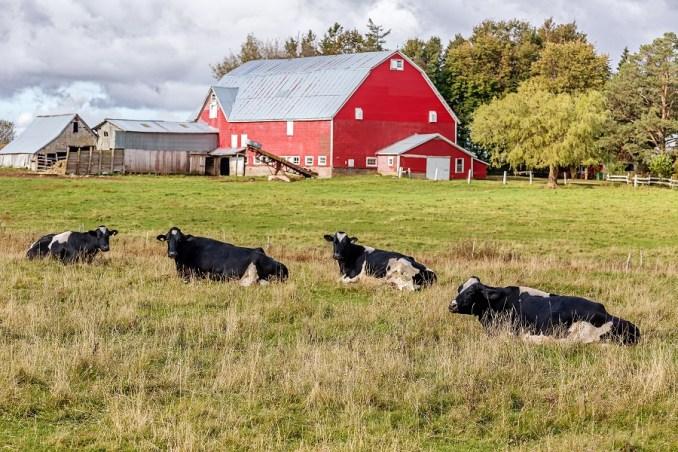 Best Farm Name Ideas & Inspiration