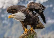Positive Traits of Eagles Every Leader Should Imitate & Learn From