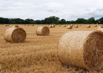 Where to Buy Straw and Hay Bales