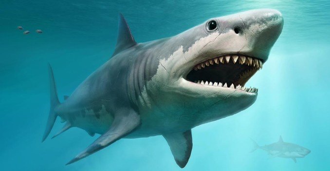 Interesting Facts About The Megalodon Shark