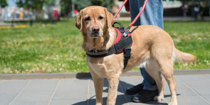 Requirements for Service Dog and Handler Teams