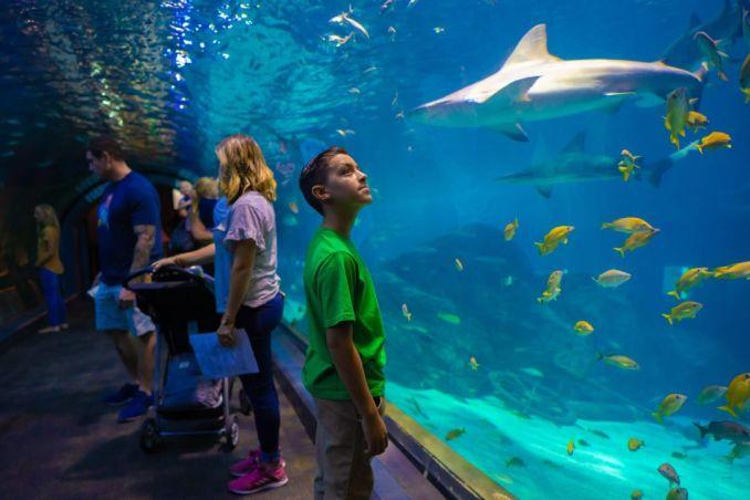akvarijima u SAD -u