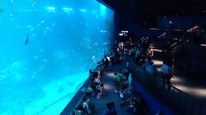 best home aquarium