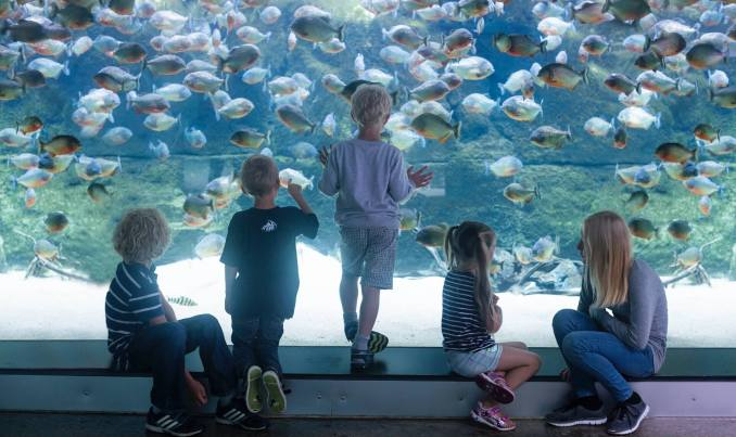 best home aquariums in the world