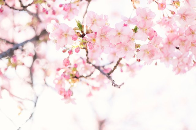 Living in Harmony with the Seasons: Spring