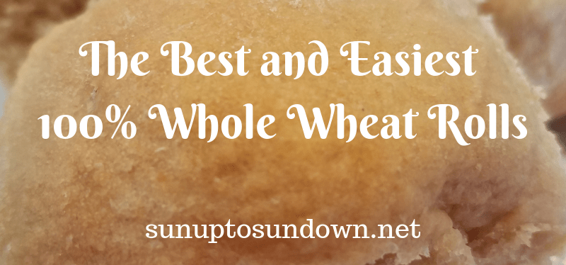 The Best and Easiest 100% Whole Wheat Rolls