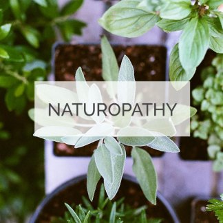 Naturopathy Minneapolis