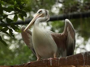 Avairy at Wildlife Park - Sunway Lagoon Malaysia Zoo