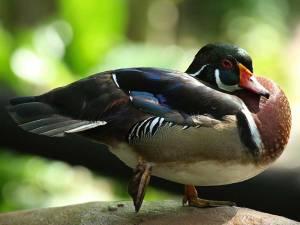 Petting Village at Wildlife Park - Sunway Lagoon Malaysia Zoo