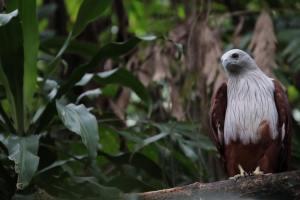 at Wildlife Park, Sunway Lagoon