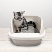 Cat litter box_1_1