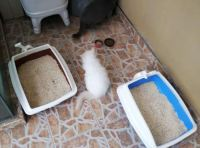litter boxes side by side01