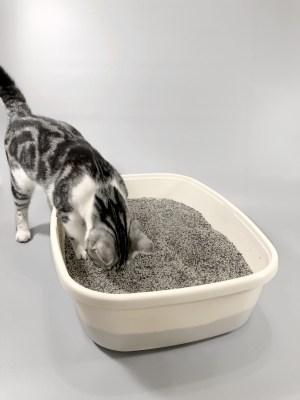 ทรายแมวต้องเปลี่ยนบ่อยแค่ไหน? ทำความสะอาดอย่างไร?