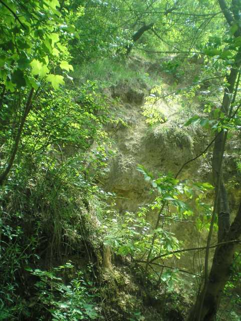 Alsó-Jegenye-völgy
