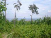 Nagykovácsi a Kopasz-erdőből