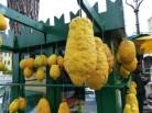 cédrátcitrom vagy citron