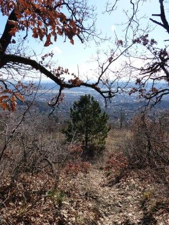 Budaörs a Magas-Frank-hegyről