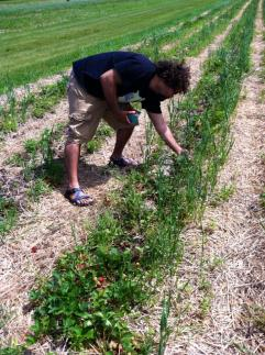 Alyssa and her fiancé enjoy picking fresh fruits when they come into season. Rulf's Orchard, about 15 minutes from Plattsburgh, has blueberry, strawberry, and apple picking.
