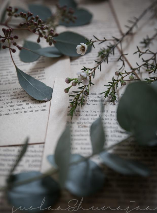 joulukukat-eukalyptus