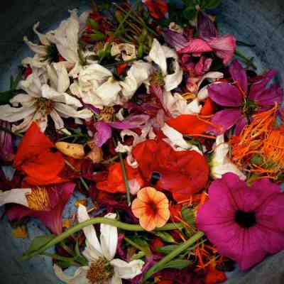 Colourful flowers in a bowl
