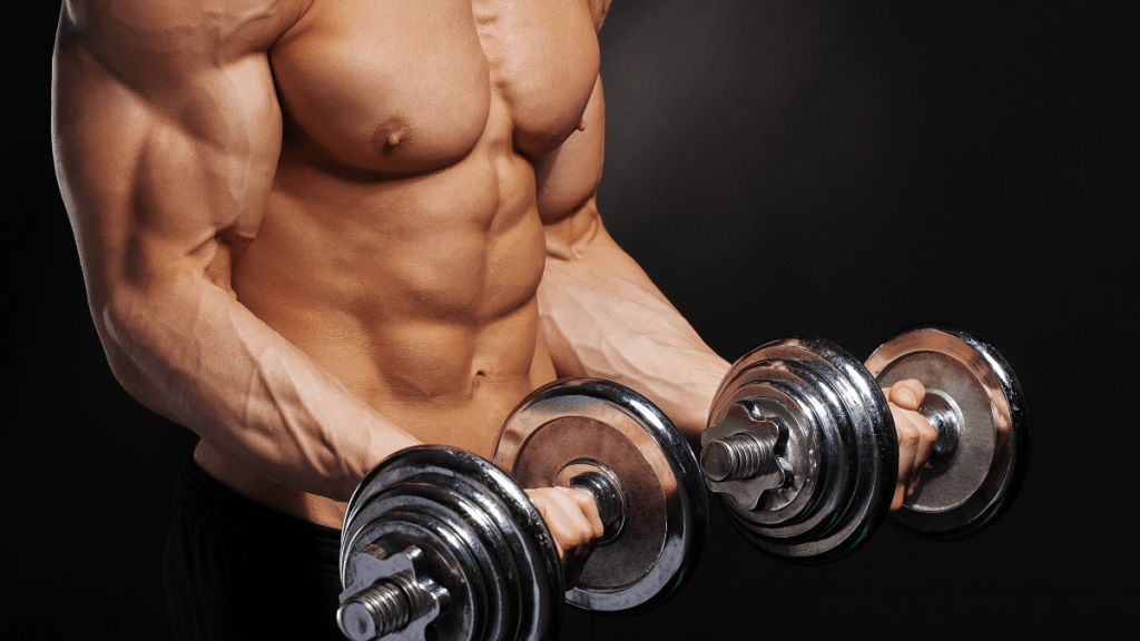 build muscle biceps
