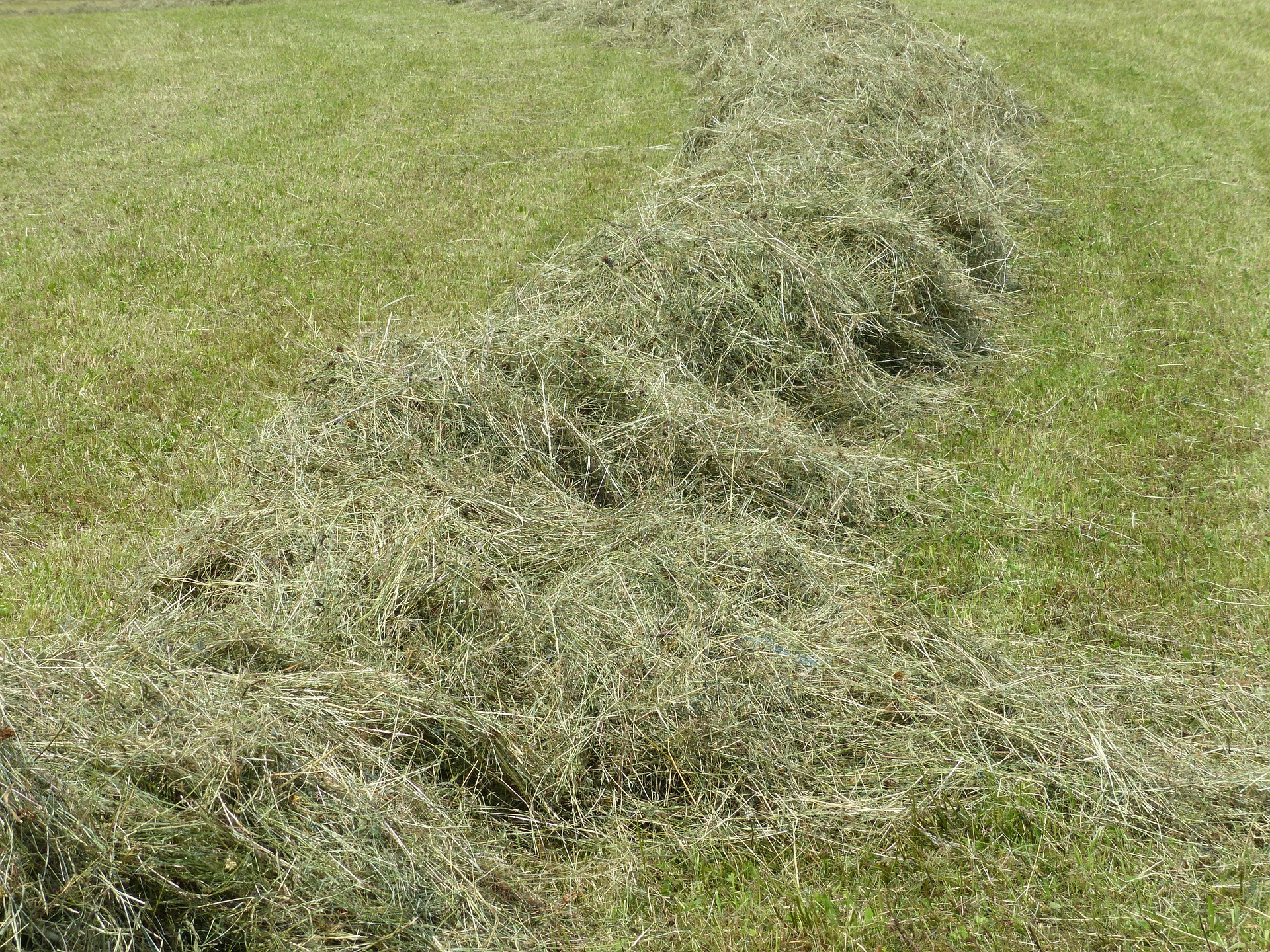 how to dethatch your lawn