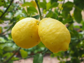 lemon-1117562_960_720[1]