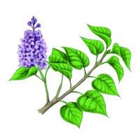 26 germinal, le lilas