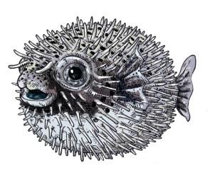 fugu-copie