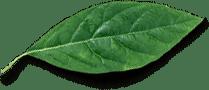 Green leaf for business superboss blog
