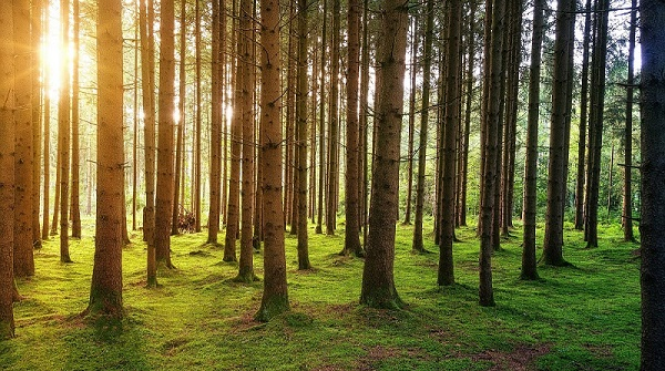 Forest in the sun - looking for the best business ides