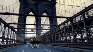 clydesdale_nyc_2002