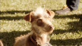 Bud Light – Rescue Dog (2012)