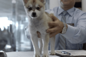 "Cars.Com 2013 Supoer Bowl XLVII commercial ""Wolf"" more drama"